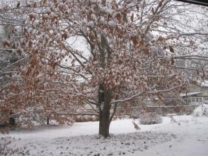 first 2010 snow 004